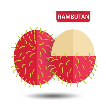 rambutan: Rambutan, fruit vector illustration