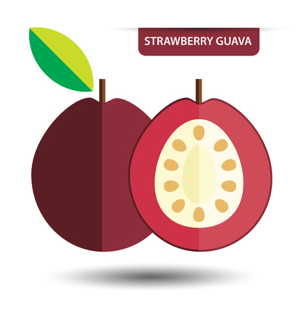 guava fruit: Strawberry guava, fruit vector illustration Illustration