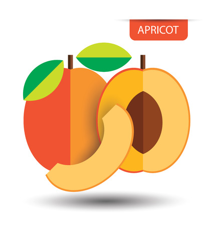 apricot: Apricot, fruit vector illustration