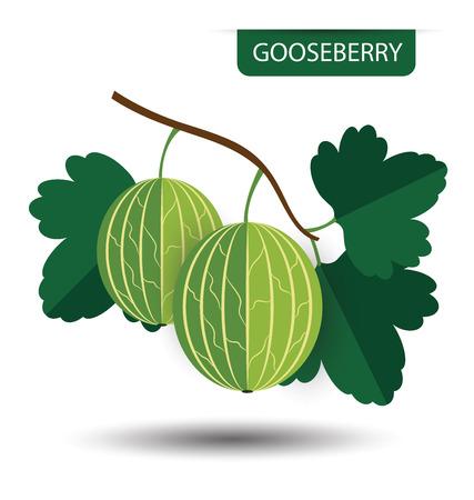 grosella: grosella, ilustración vectorial de fruta