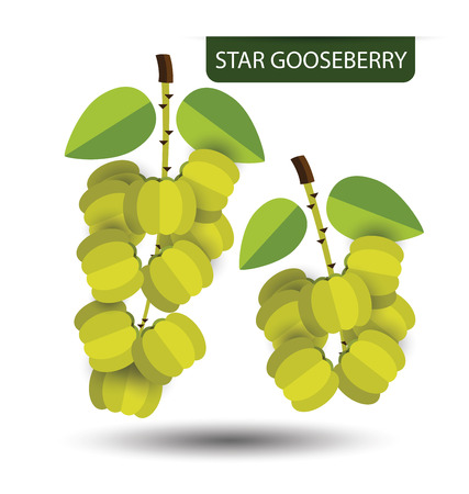 branch cut: Star gooseberry, fruit vector illustration Illustration