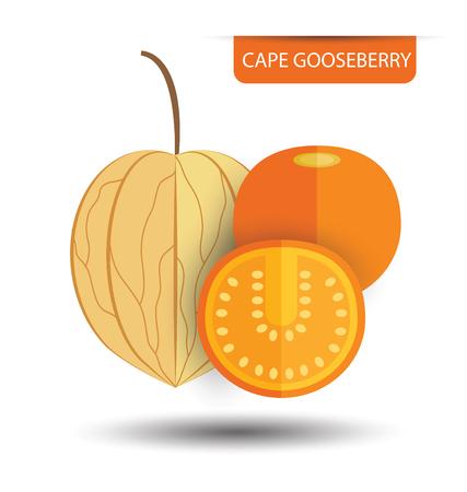 cape: Cape gooseberry (physalis) vector illustration Illustration