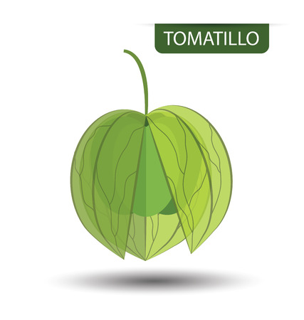rind: Green tomatillo, fruit vector illustration