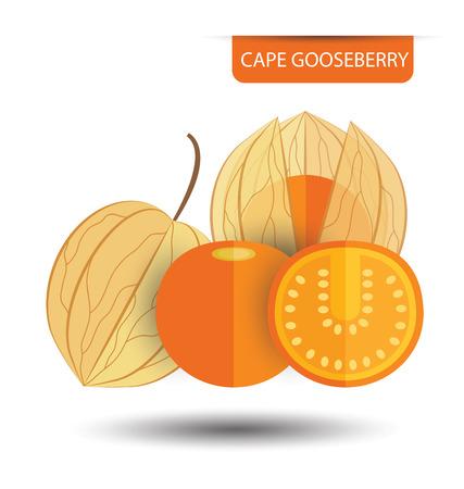 husk: Cape gooseberry (physalis) vector illustration Illustration