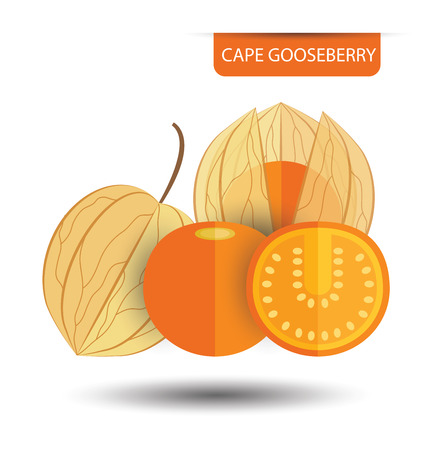 Cape gooseberry (physalis) vector illustration Stock Illustratie