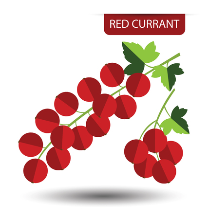 red currant: Red currant, fruit vector illustration