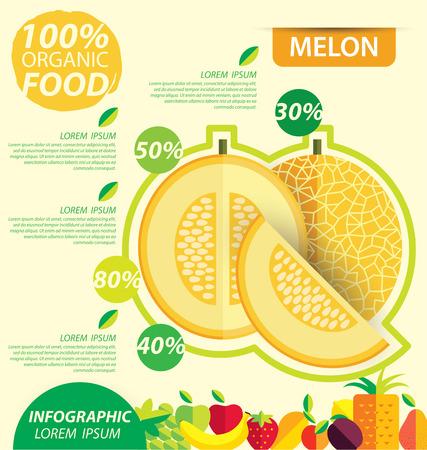 Cantaloupe melon. Infographic template. vector illustration.