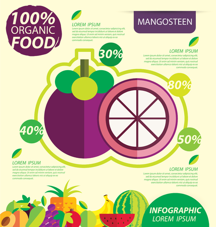 text space: Mangosteen. Infographic template. vector illustration. Illustration