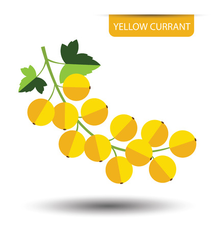 currant: Yellow currant, fruit vector illustration