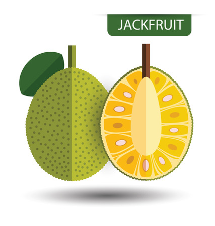 Jackfruit, fruit vector illustration