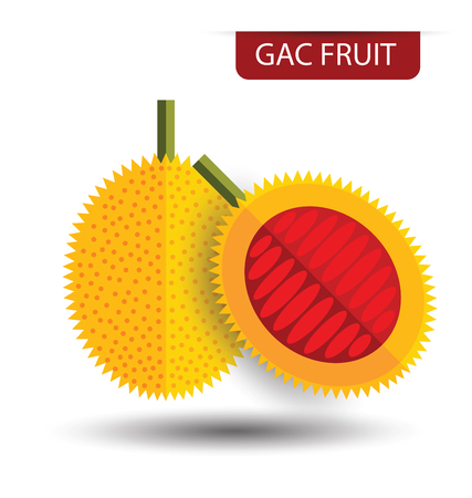 carotene: Gac fruit, fruit vector illustration