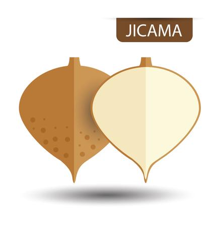 tuberous: jicama vector illustration