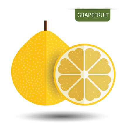 grapefruit: Grapefruit. vector illustration. Illustration