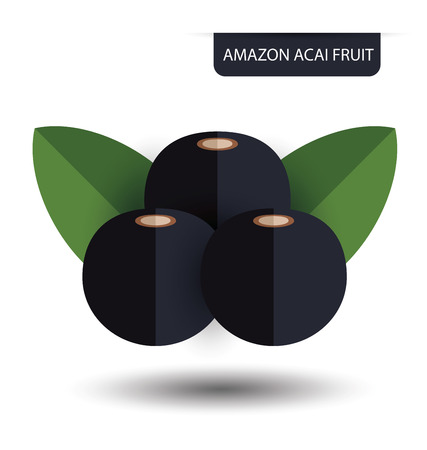 acai: Flacourtia, Amazon acai fruit vector illustration