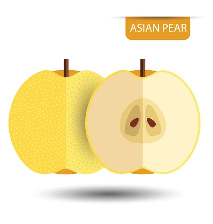 Asian pear, fruit vector illustration