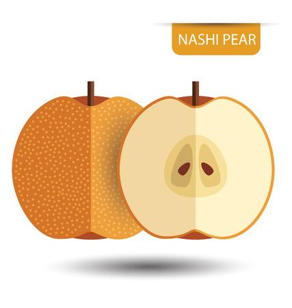 Nashi pear, fruit vector illustration Illustration