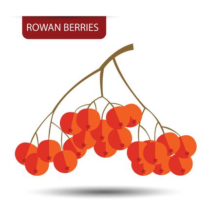 rowan: Rowan berries vector illustration Illustration