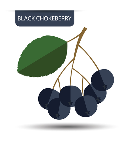 ashberry: Black chokeberry vector illustration