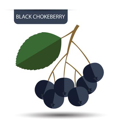 Black chokeberry vector illustration