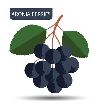 aronia: Aronia berries vector illustration