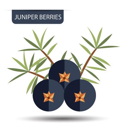 enebro: bayas de enebro, ilustración del vector de frutas.