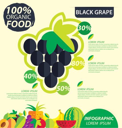black grape: Black grape. Infographic template. vector illustration. Illustration