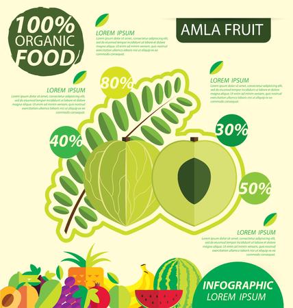 Amla fruit. Infographic template. vector illustration.