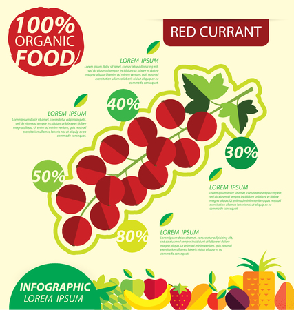 red currant: Red currant. Infographic template. vector illustration. Illustration