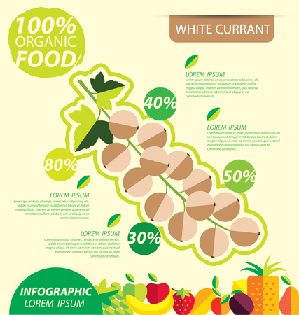 currant: White currant. Infographic template. vector illustration.
