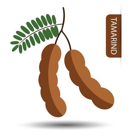 tamarindo: Tamarindo, fruta ilustración vectorial Vectores