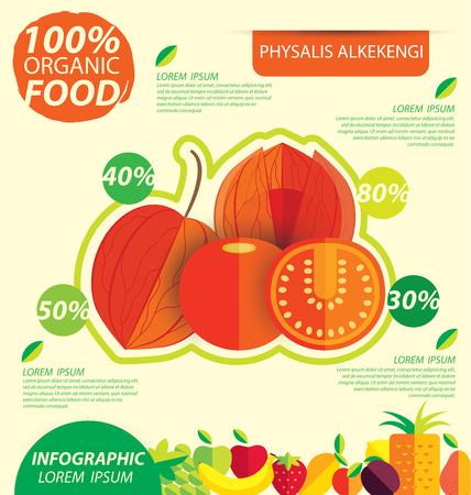 alkekengi: Physalis alkekengi. Infographic template. vector illustration. Illustration