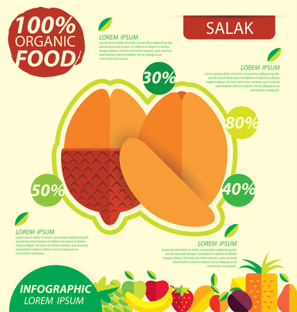 salak: Salak fruit. Infographic template. vector illustration.