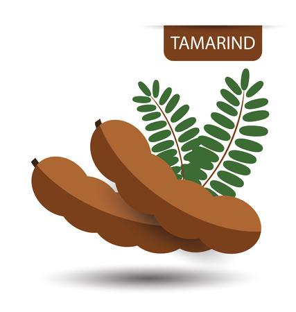 Tamarind, fruit vector illustration