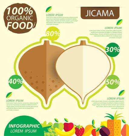 jicama. Infographic template. vector illustration.