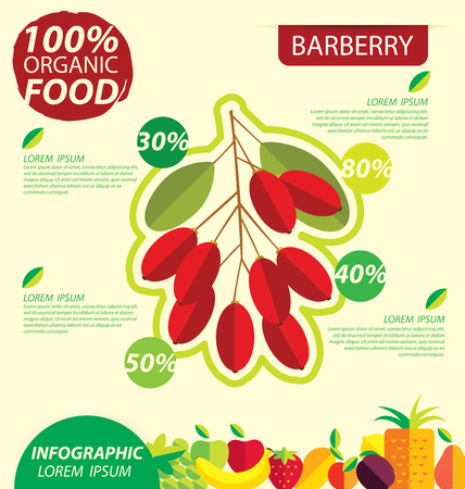 barberry: Barberry. Infographic template. vector illustration.