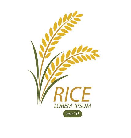 oat field: Rice. Vector illustration. Illustration