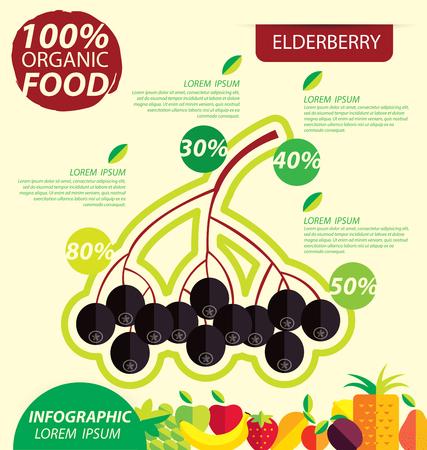 Elderberry. Infographic template. vector illustration.