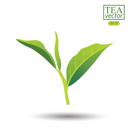 ceylon: Green tea leaf isolated on white background. Vector illustration.