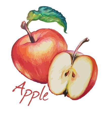 Red apple. Hand drawn watercolor painting. Vector illustration. Ilustração