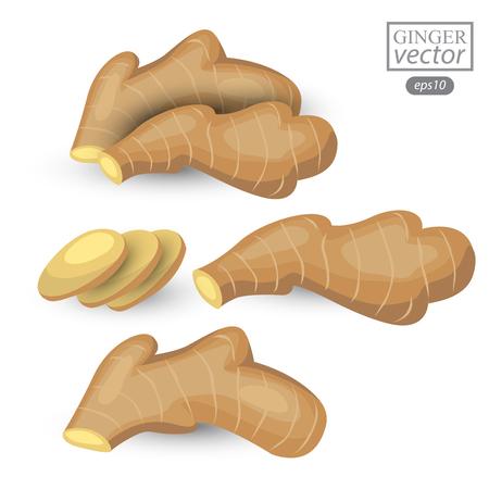 ginger isolated on white background. Vector illustration.