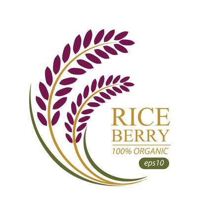 paddy field: Rice berry. Vector illustration. Illustration