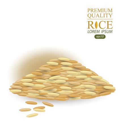 jasmine rice: Rice grains isolated on white background. Vector illustration.