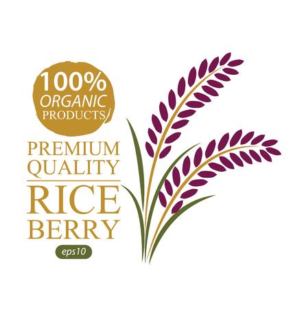Rice berry. Vector illustration. Ilustração