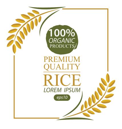 paddy field: Rice. Vector illustration. Illustration
