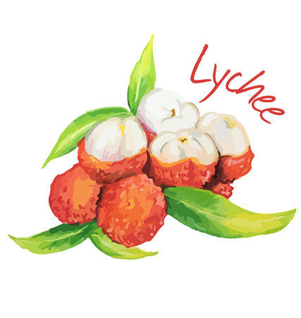 Lychee. Hand drawn watercolor painting. Vector illustration. Çizim