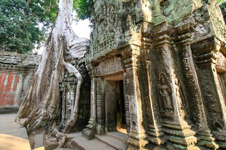 Ta Prohm Temple, Siem Reap, Cambodia Фото со стока - 102011165