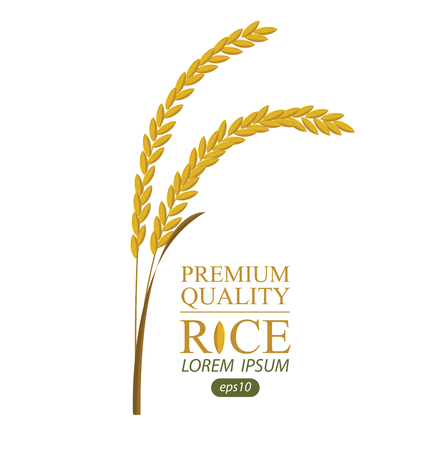 Rice. Vector illustration. Illustration