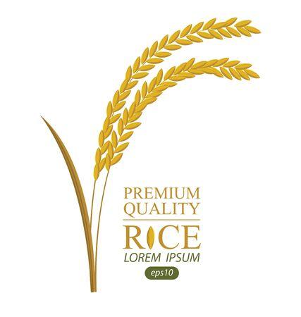 Rice illustration. Illustration