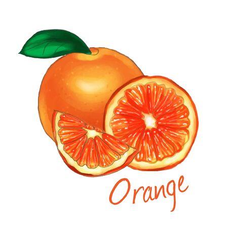 Orange fruit isolated on white background. vector illustration.