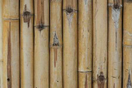 Bamboo Texture Background Stock fotó